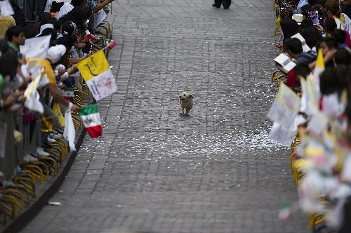 dog parade_sm.jpg