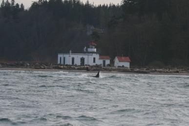 orca lighthouse