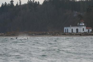 orcas lighthouse