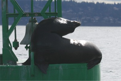 sea lion bend.jpg