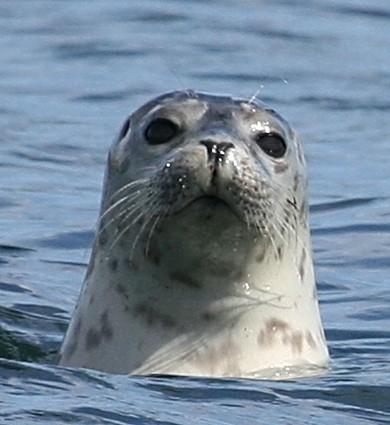 seals with sarah 070b.jpg